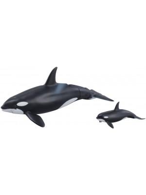 ANANIA Al-08 Killer Whale