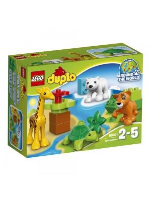 LEGO 10801 DUPLO Town 動物小寶寶 5702015597883